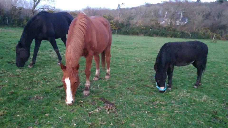 PACO - âne mâle noir - 5 ans (réservé) 81989210