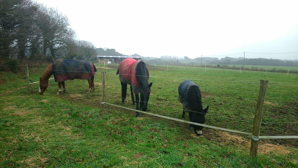 PACO - âne mâle noir - 5 ans (réservé) 82071610