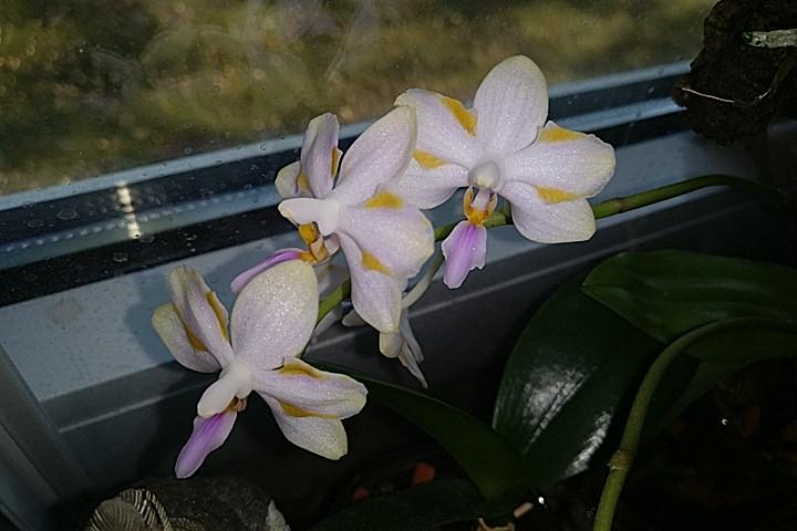 Wie heiss diese Orchidee?  Img_2010