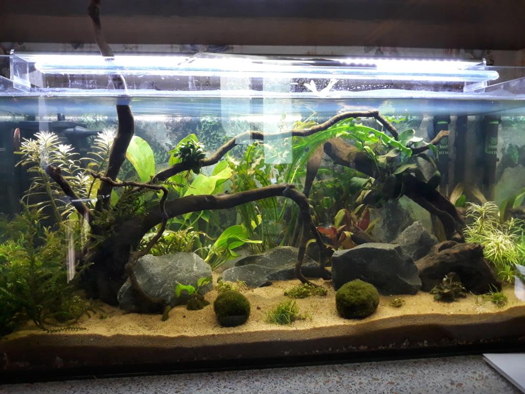 idée  pour un aquarium de 80 cm de facade  20180819