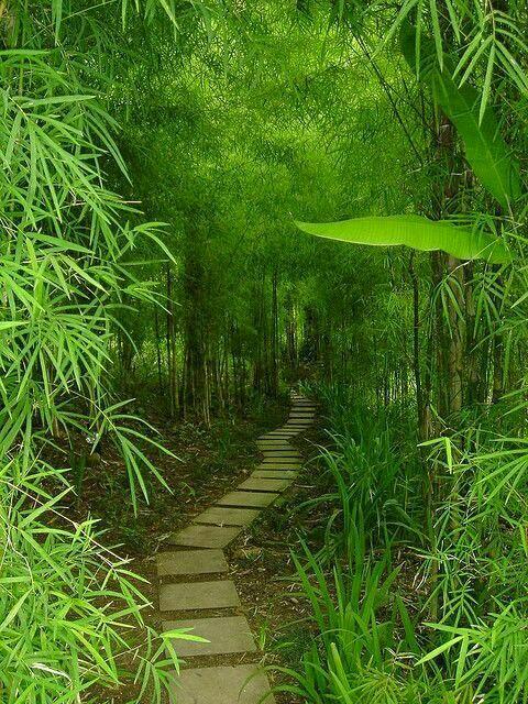 Vườn Bách Thảo 20180910