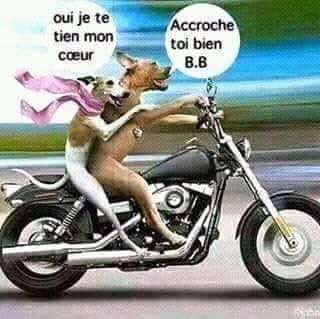 Humour en image du Forum Passion-Harley  ... - Page 2 50911410