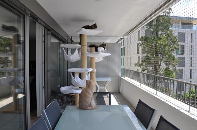 Les dangers de la maison pour le chat - Page 2 Filet_10