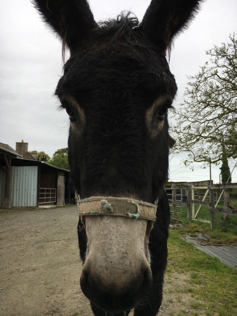 HASHTAG - âne mâle noir - 2 ans 15709810