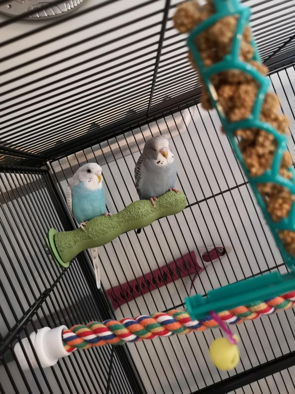 Un petit coucou de mes oiseaux  Img_2021