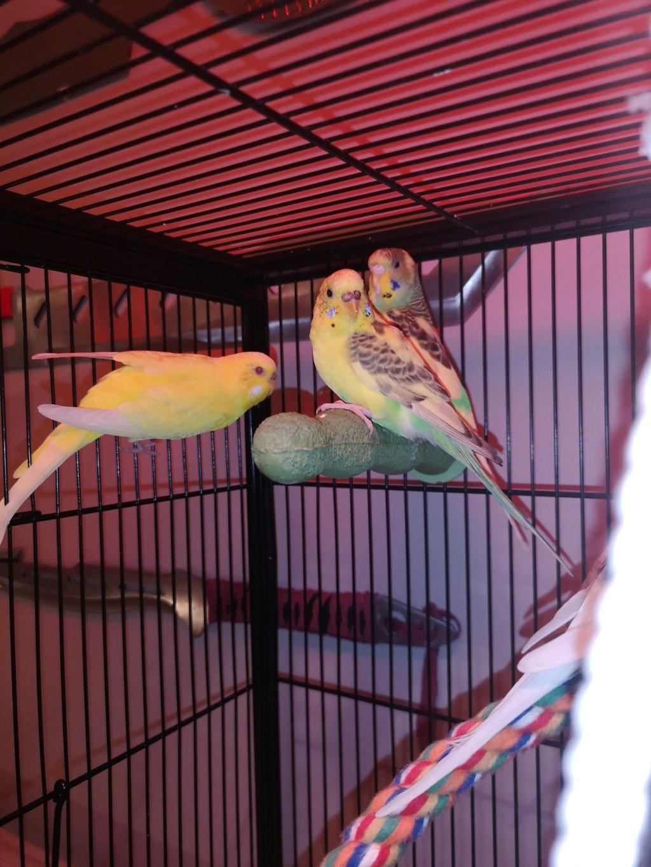 Un petit coucou de mes oiseaux  Img_2022