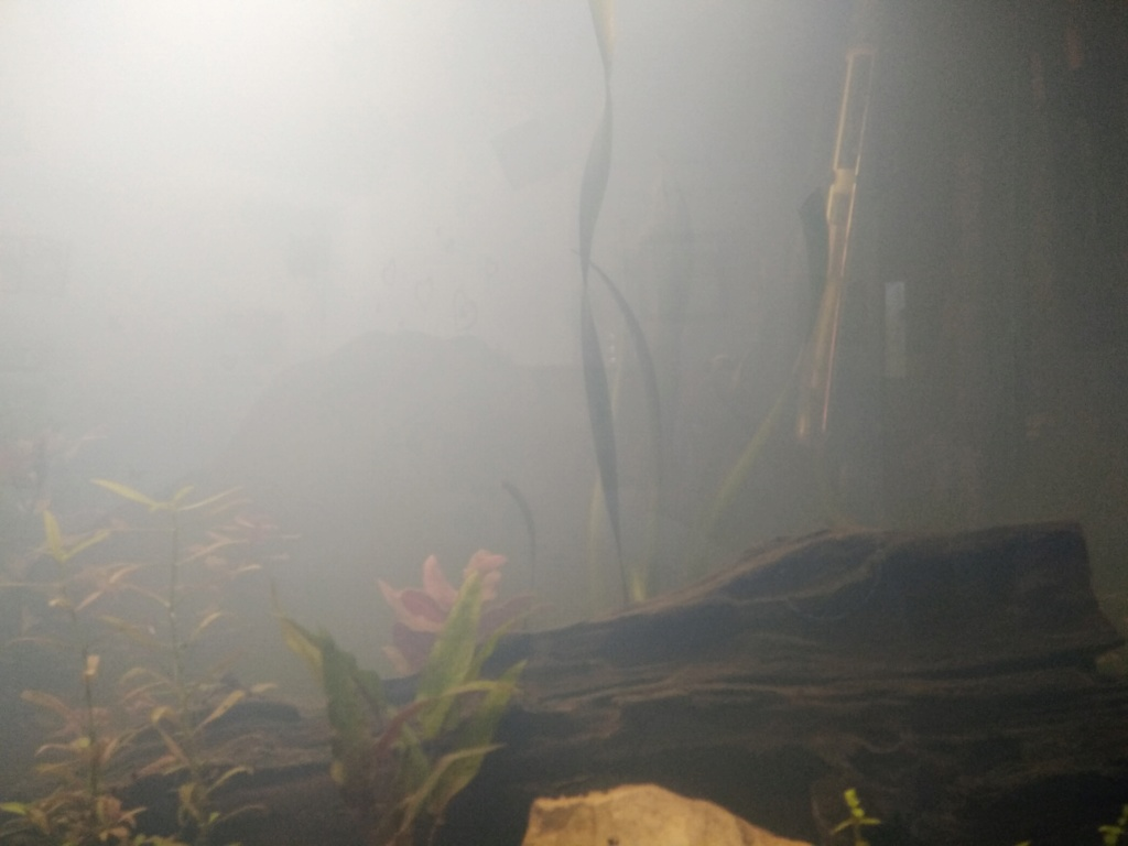 Démarrage de mon aquarium 300 L Img_2012
