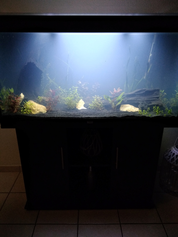 Démarrage de mon aquarium 300 L Img_2015