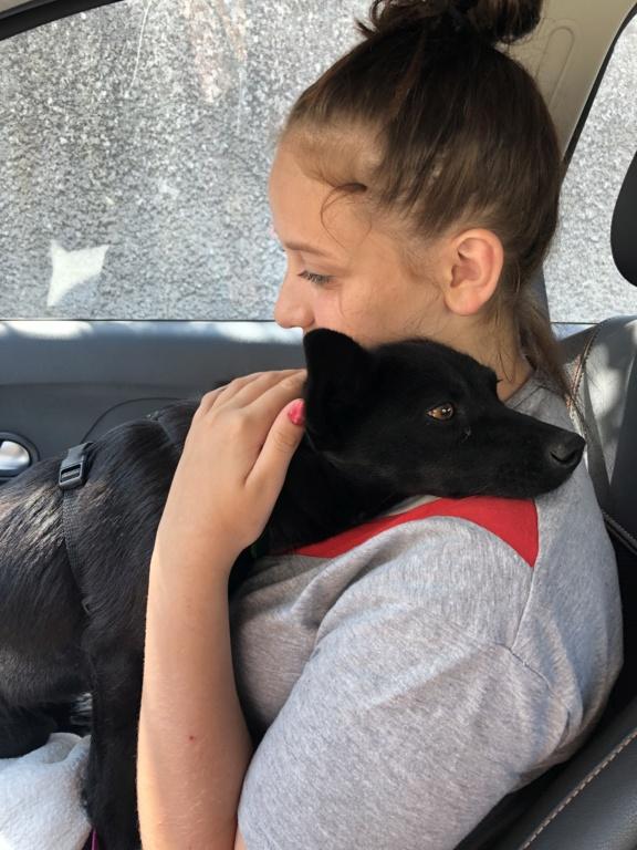 LUCIE - Jolie femelle croisée de petite taille, née en 2016 - REMEMBER ME LAND PASCANI - en FA chez VIRGINIE (30) 666be010