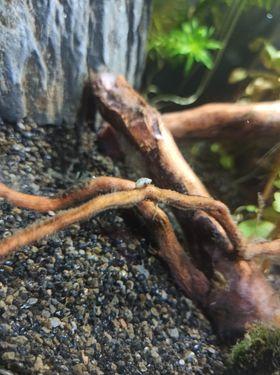 Idenfitication d'escargots inconnu (?) 12642610