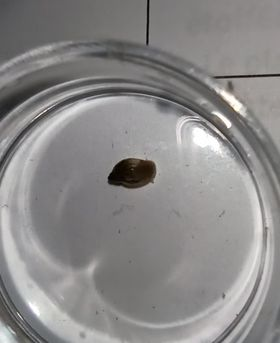 Idenfitication d'escargots inconnu (?) 12711710