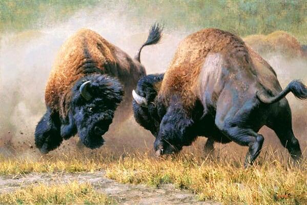 CONROG BIN book Buffal12