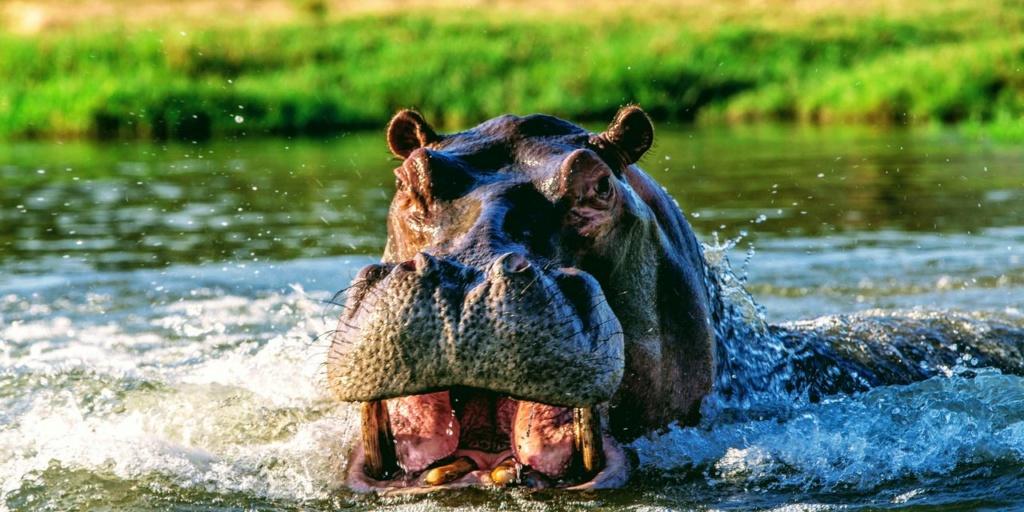 CONROG BIN book Hippo13