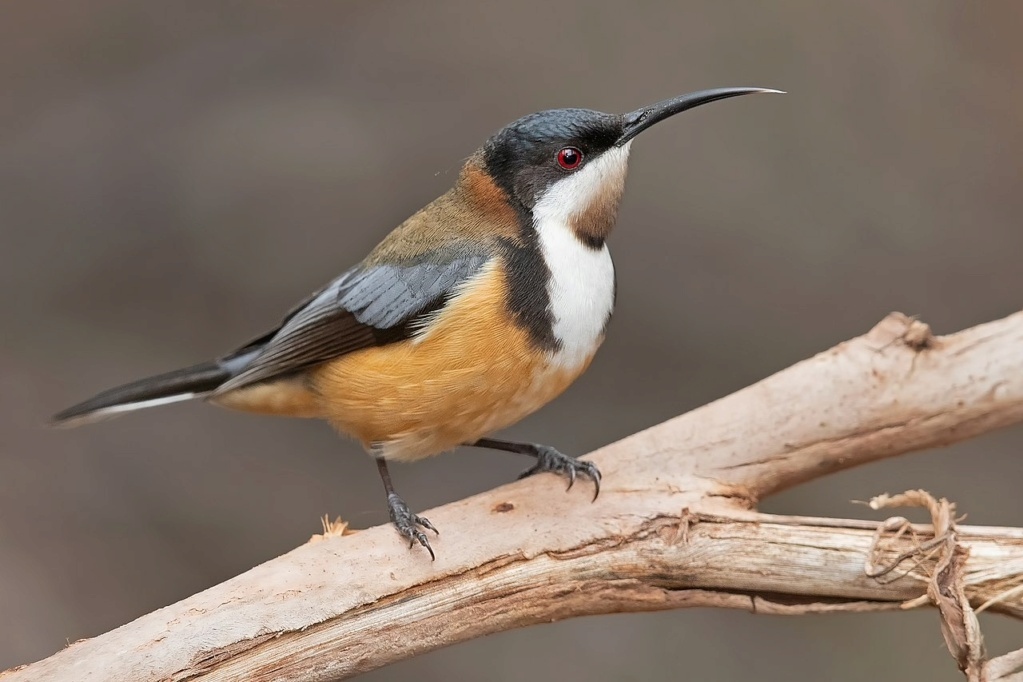 Bird feeder, new visitor Spineb10