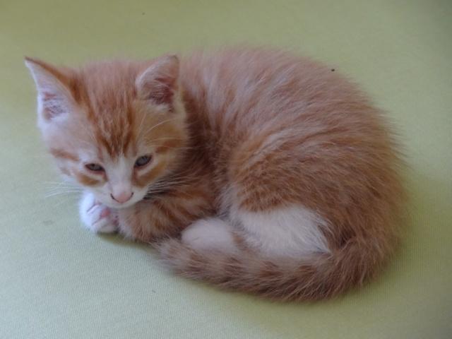voici Garfield Dsc00315