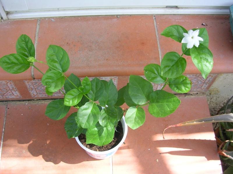 Quelques floraisons de mon jardin - Page 3 Dscn5219