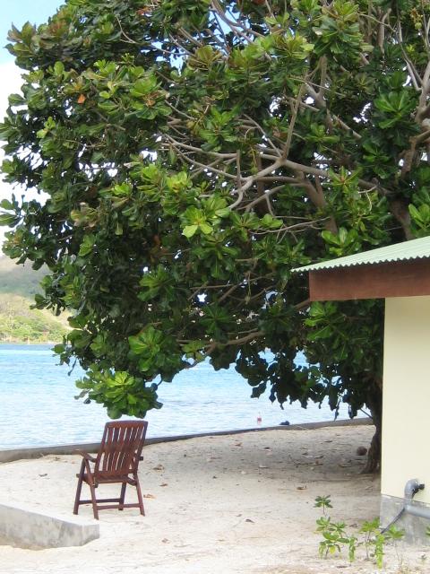 recherche le nom de l'arbre [Barringtonia neocaledonica] Barrin10