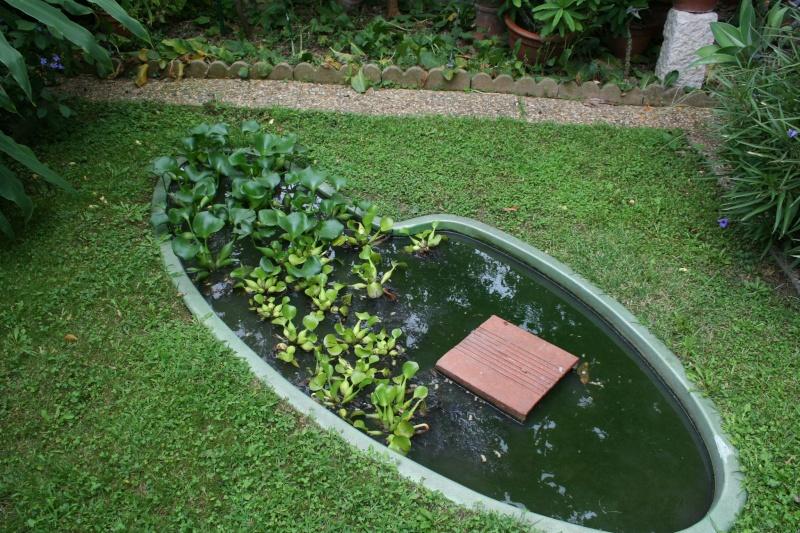 Eichhornia crassipes Bassin25