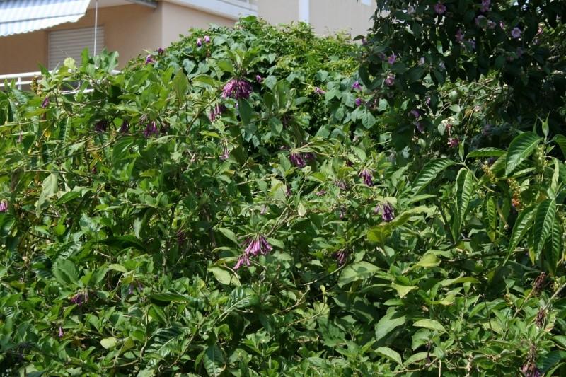 Arbres sympa dans mon jardin en ce moment Iochro10