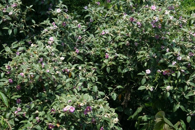 Arbres sympa dans mon jardin en ce moment Laguna11