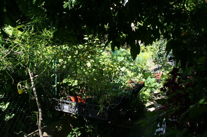 Ombre et tropicales Mini_p10