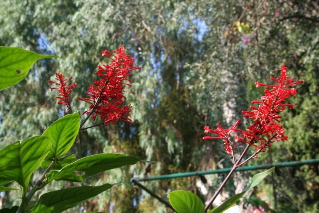 Rapide tour de jardin en ce 1 er octobre Odonto11