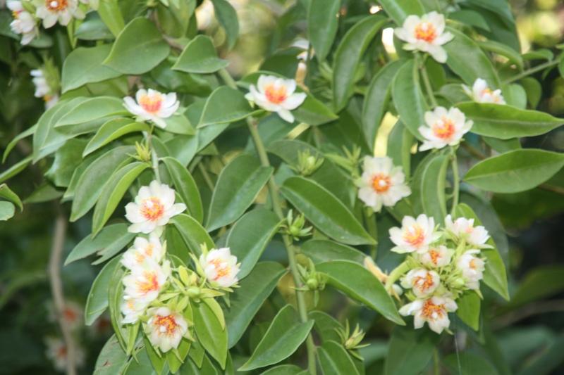 Encore quelques fleurs au jardin Peresk19