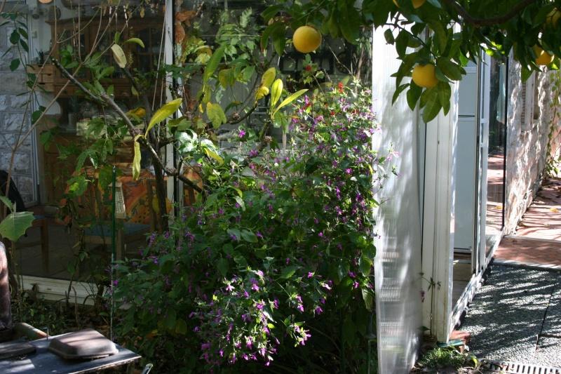 Ambiance de mi janvier 2008 Perist10