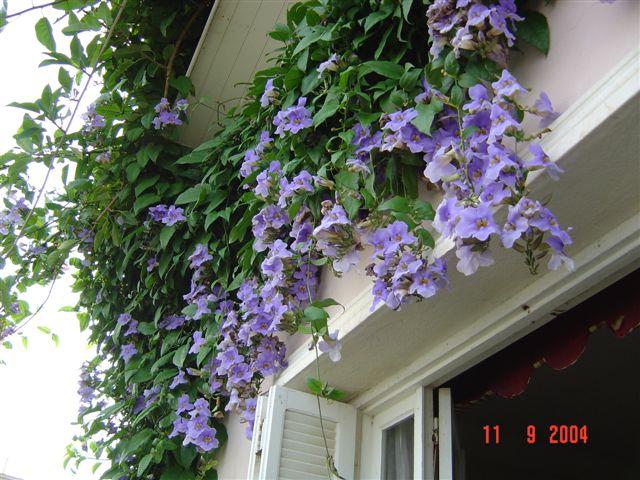Rapide tour de jardin en ce 1 er octobre Photo_10