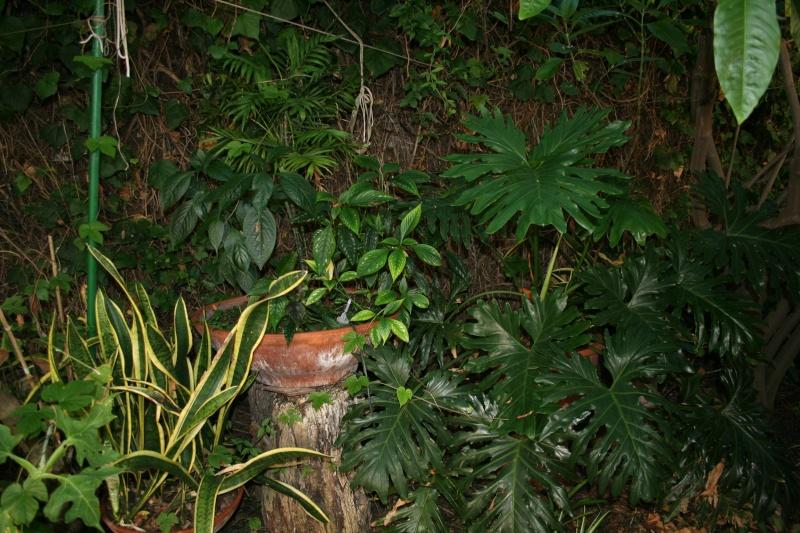 Ombre et tropicales Sous_b10
