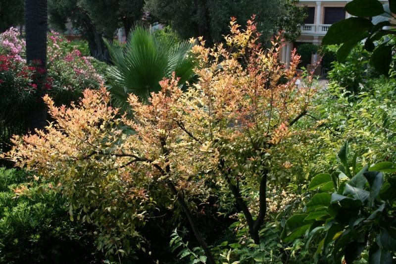 Arbres sympa dans mon jardin en ce moment Syzygi11