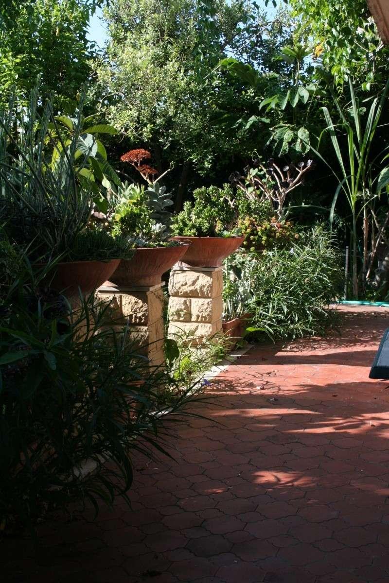 Quelques trucs du jardin en ce moment Terras11