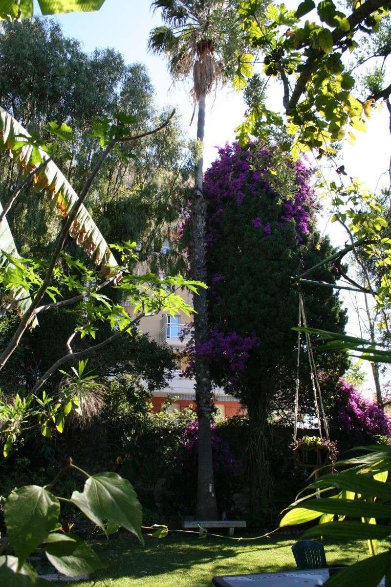 [Washingtonia robusta] quel est le nom des ces palmier svp merci :)  Washin10