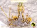 "Myth Cloth Environnement ""5 ème sens"" P8180410"