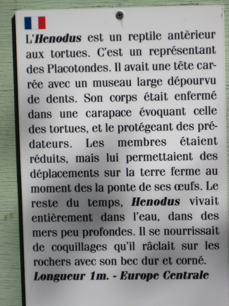 Reportage photos, les tortues fossiles. Aout_211