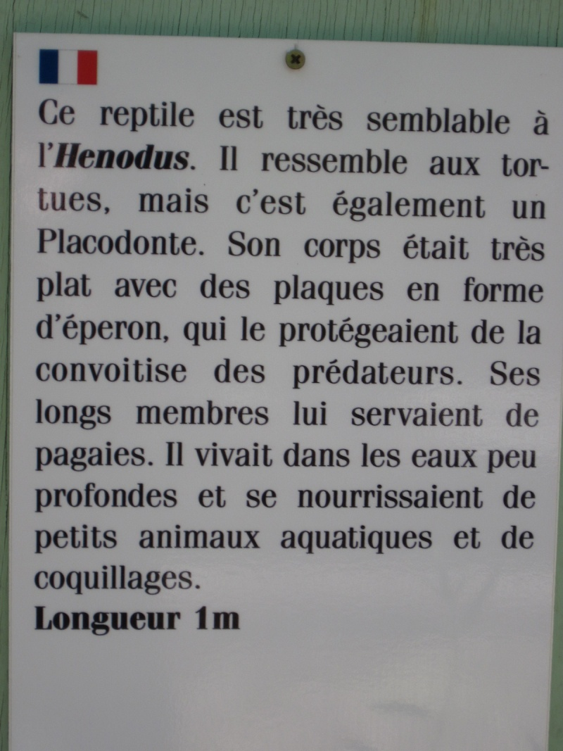 Reportage photos, les tortues fossiles. Aout_214