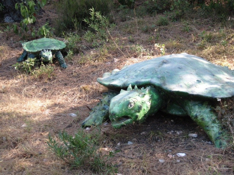 Reportage photos, les tortues fossiles. Aout_215
