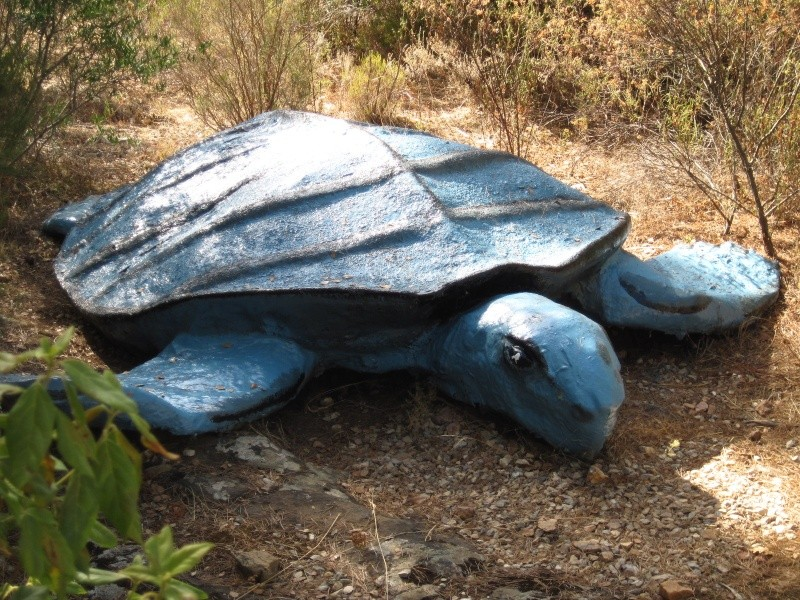 Reportage photos, les tortues fossiles. Aout_217