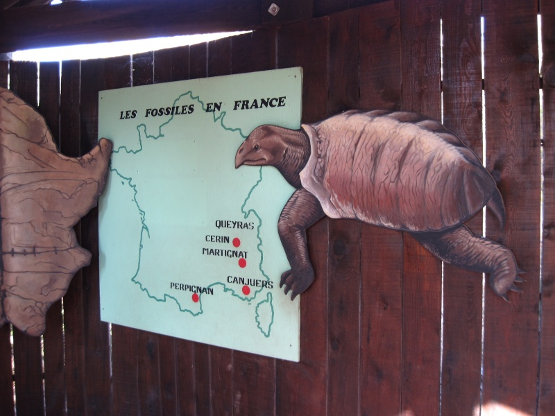Reportage photos, les tortues fossiles. Aout_221