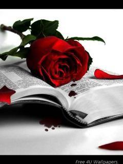 St valentin, et déclaration. - Page 5 97039j10