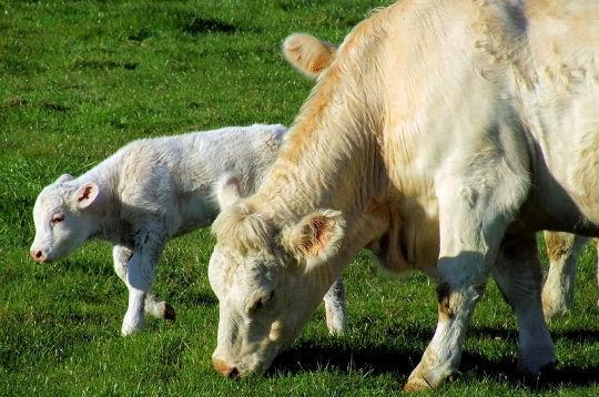 Les bébés de la ferme 14-nat10