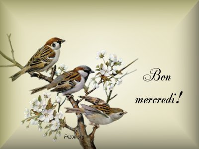 bonjour - Page 16 8910