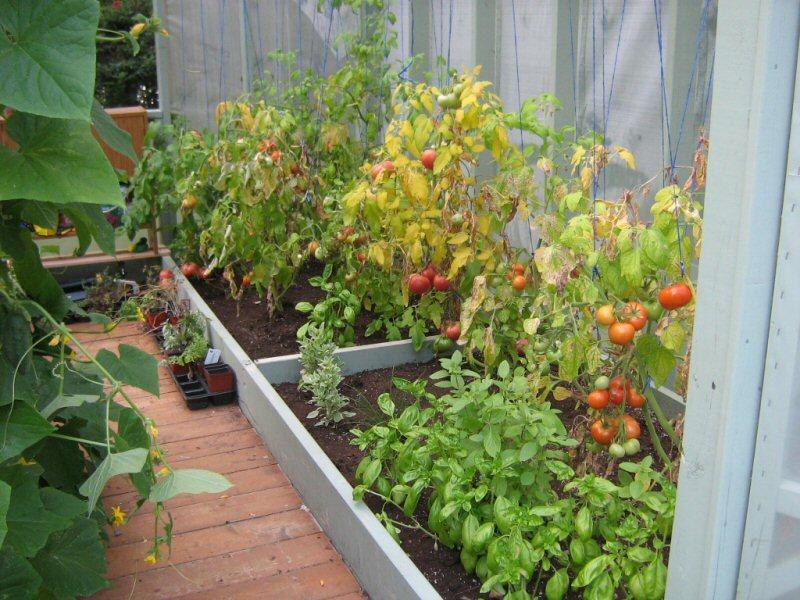 Variétés de tomates et gout... Tomate10