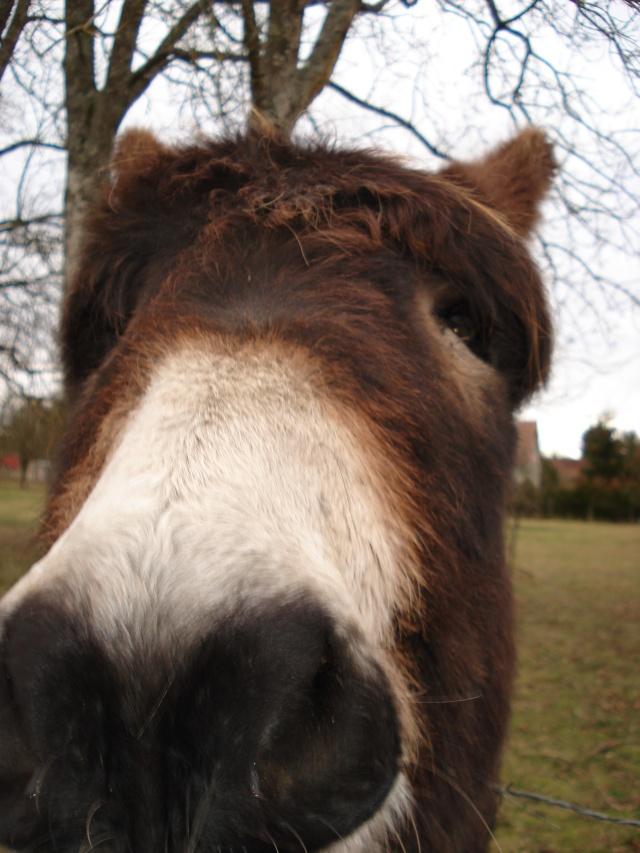 Arthur   vous fait un bisou Hiver_26