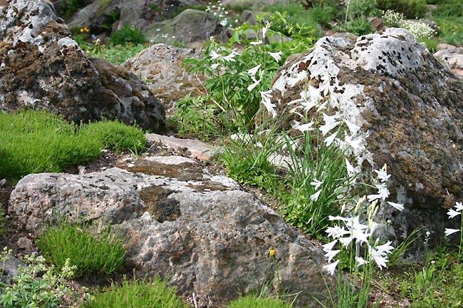 Une rocaille en juillet. Img_0311