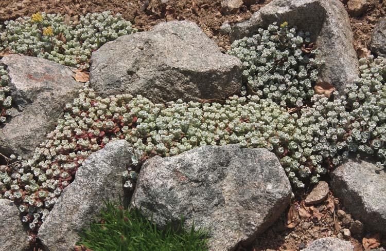 Une rocaille en juillet. Img_5617