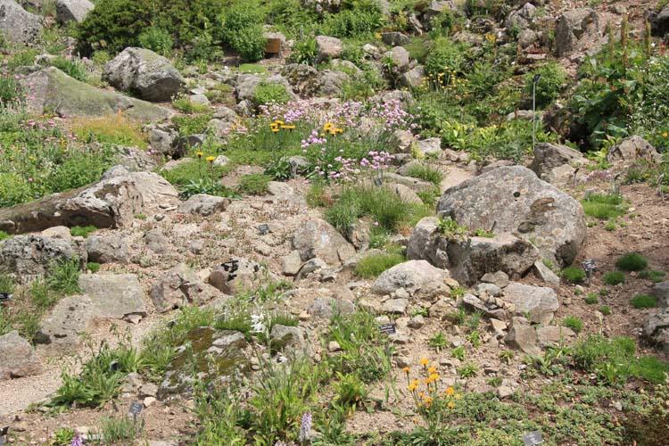 Une rocaille en juillet. Img_5724
