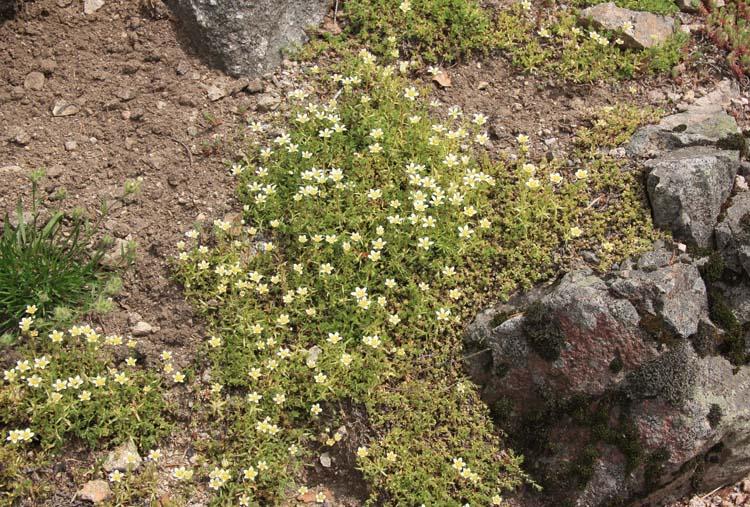 Une rocaille en juillet. Img_5740