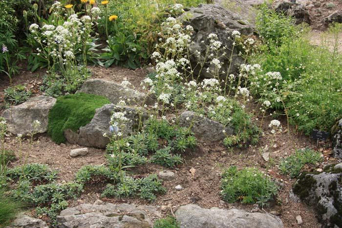 Une rocaille en juillet. Img_5742