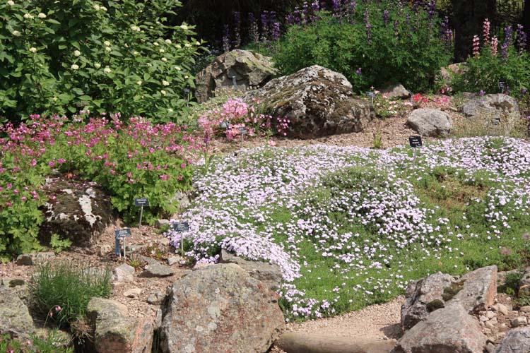Une rocaille en juillet. Img_5744